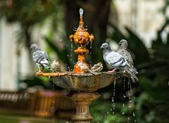 Baño de pardais