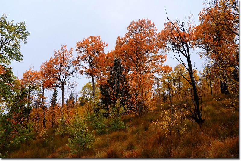 Colorado Trail (4)