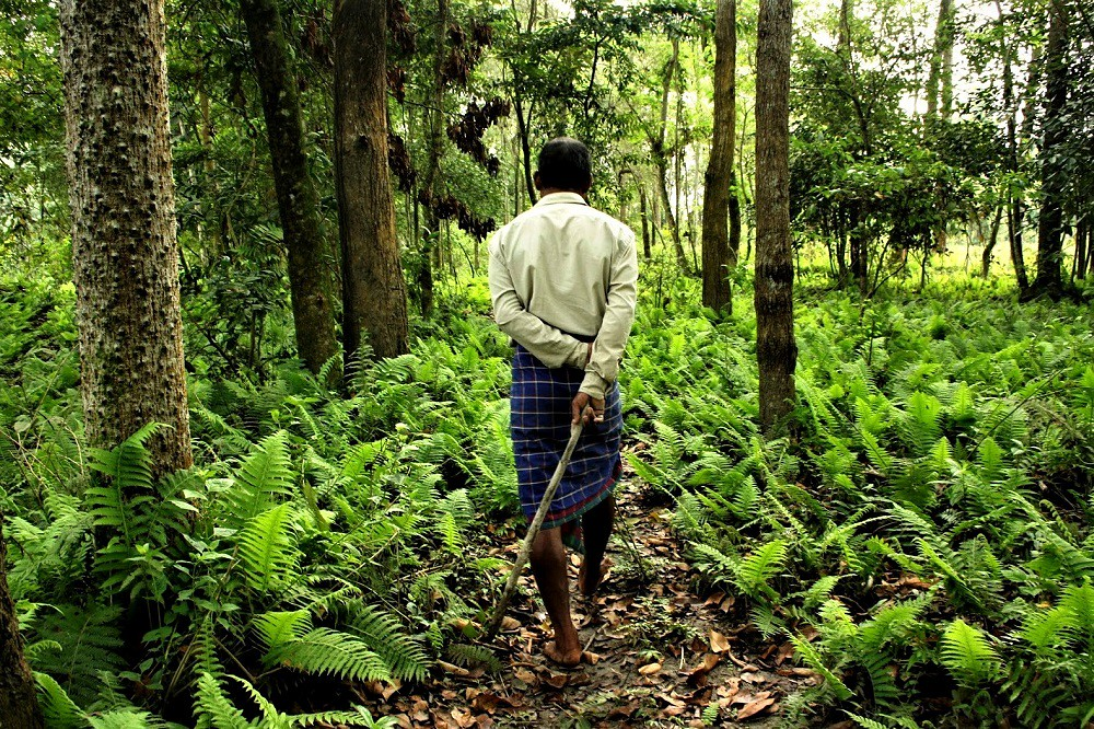 The-Forestman-of-India