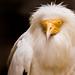 International Birds of Prey Centre (10)