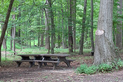 Picnic Tables in Woods