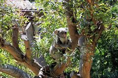 San Francisco Zoo 521