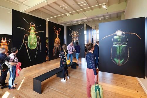 Microsculpture_ Statens Naturhistoriske Museum _ Copenhagen