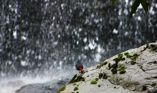 darjeeling rock garden waterfall debmalyamukherjee canon550d 18135