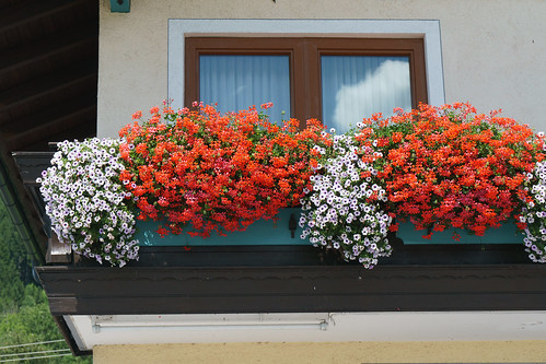 Flowers decorate many windows