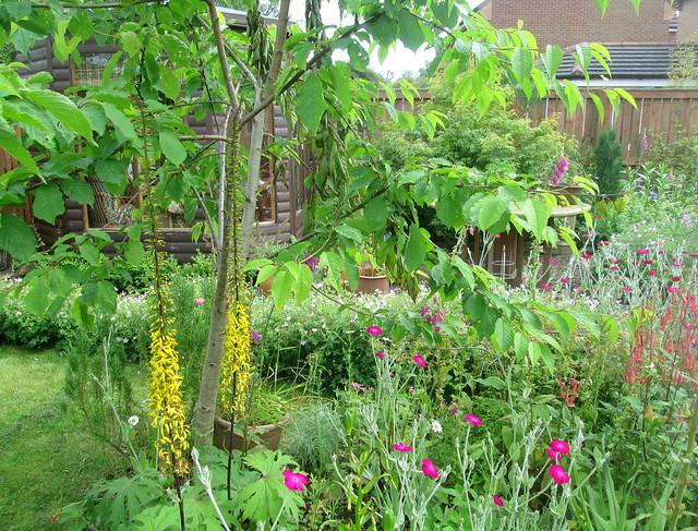back back garden flowers V garden flowers