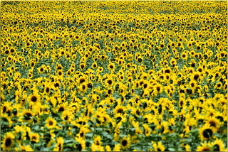 #amarelo#Yellow#gelb#jaune#gul#κίτρινος#groc#geel #زرد