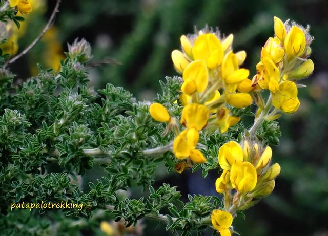 Hojas trifoliadas y flor - detalle