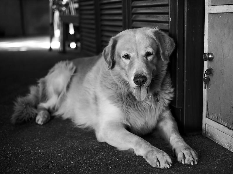 my_dog_01