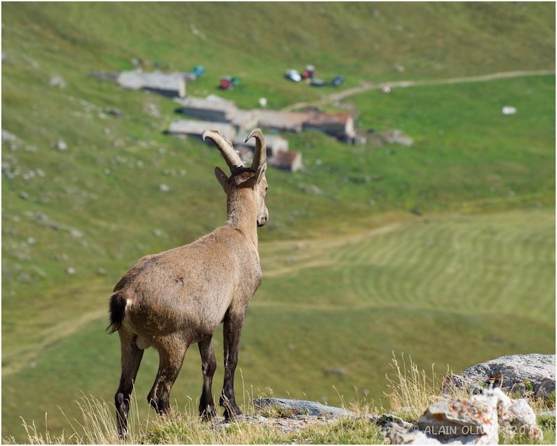 Randonnée au Col de la Vanoise 36729743616_00f4b75a6a_o