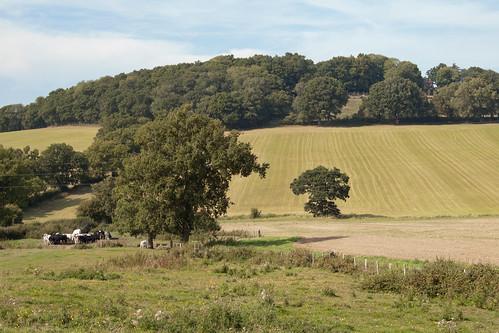 Leigh to Tunbridge Wells Walk