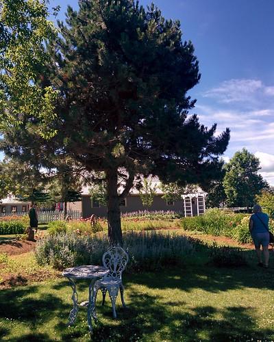 Gardens of Avonlea Village (3) #pei #princeedwardisland #cavendish #avonleavillage #garden #flowers