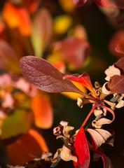 September Color