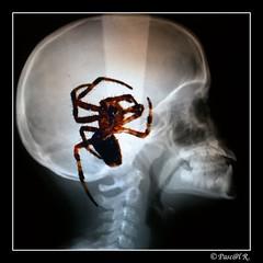 Pour Michel C+, une araignée au plafond....                                         DSC_2040