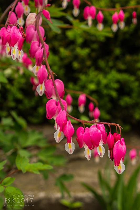 Ternopil_spring-4