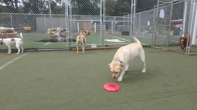 09/21/17 Frisbee Fun!!