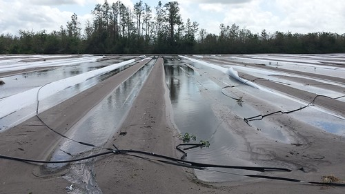 Growers analyze hurricane damage