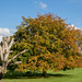 Nostell Priory IMG_0539