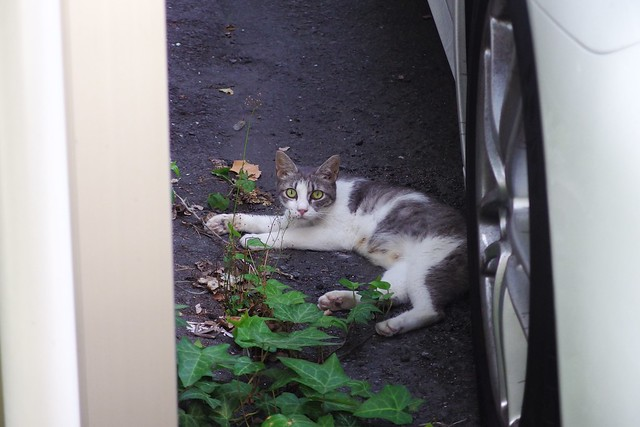 Today's Cat@2017-08-04
