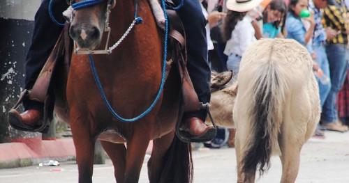 254 Feria San Pedro Carcha (33)