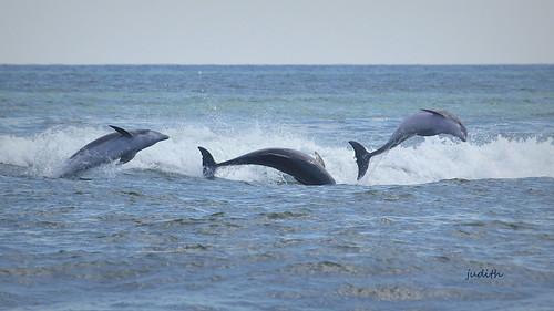 dolphin play -- EXPLORED