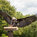 International Birds of Prey Centre (18)