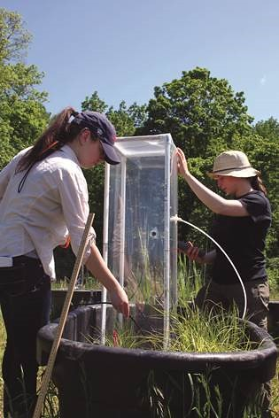 NRE undergraduates, Mary Donato and Alaina Bisson, measure CO2 and methane levels in wetland mesocosms