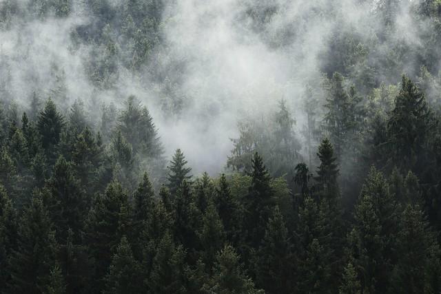 A foggy vision