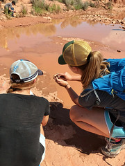 Campers learned how trace fossils are made by studying live organisms and tracks (Mail Station Site)