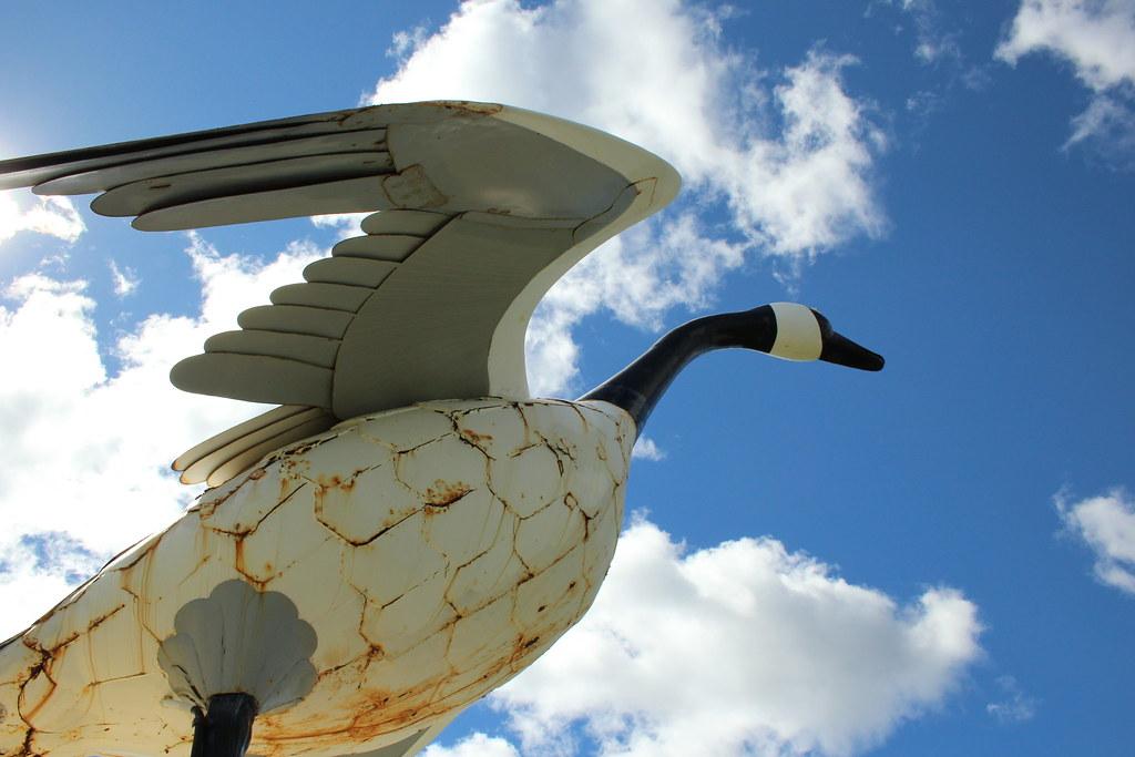 Wawa Goose