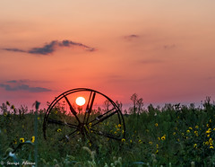 Rusty wheel in field at sunset
