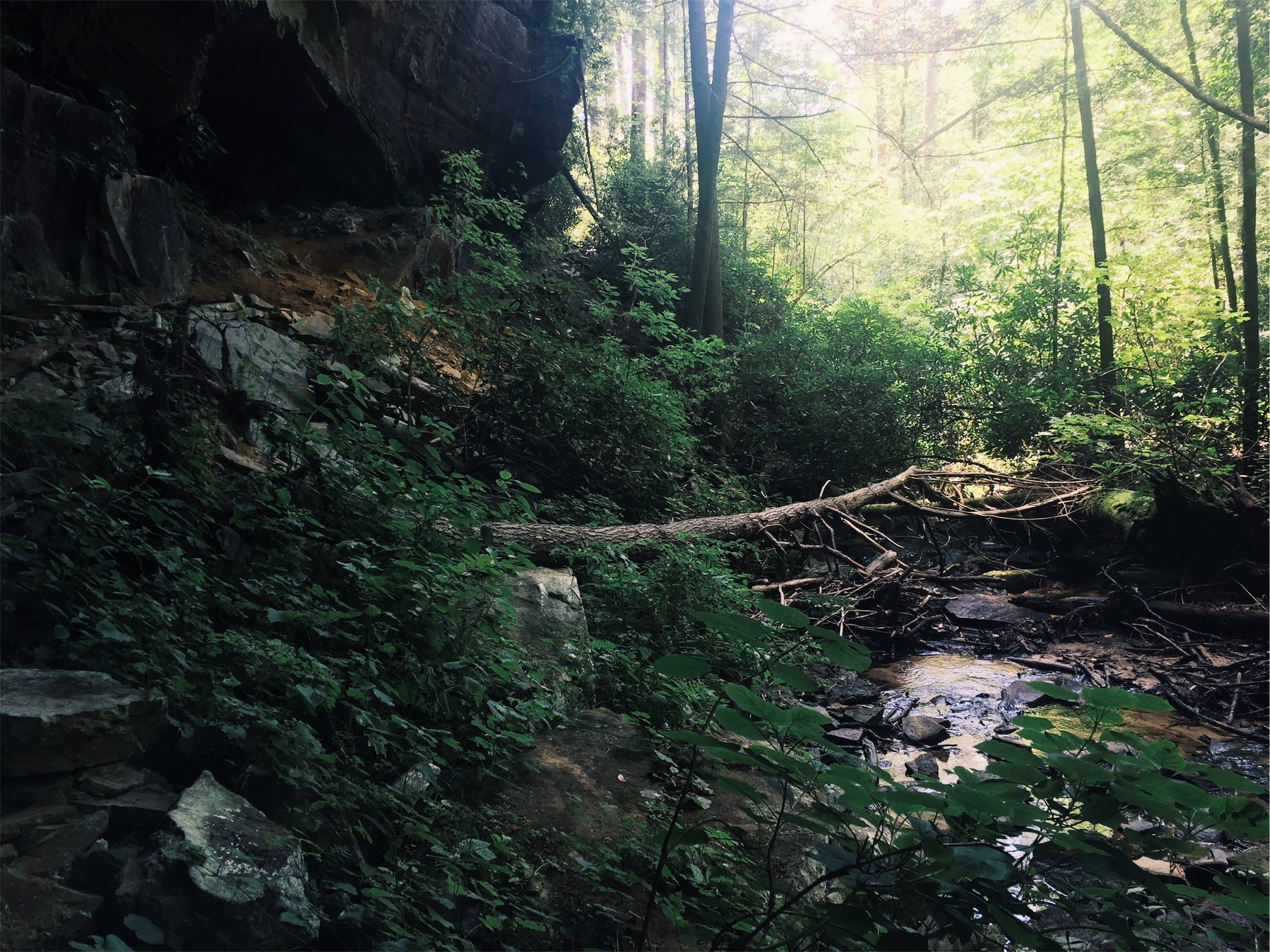 Priya the Blog, Nashville blogger, August 2017 update, Big South Fork state park