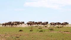 Masai Mara - Aug 2017