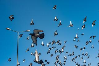 2013-Turquia-Istambul-0013.jpg