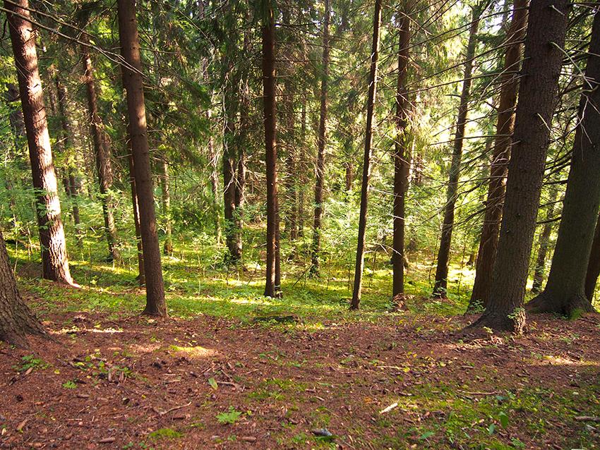 metsä-kuopio-puijo-2