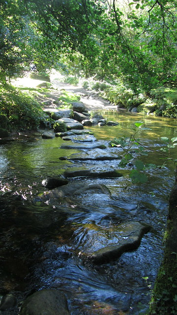 Stepping Stones near Higher Meavy Bridge