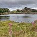 Whin Sill and Willow Herb