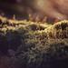 Moss by lichtspuren