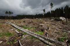 Finnish Clearcuttings - Creative Commons Attribution