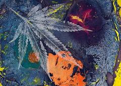 Cannabis Understands - 2017