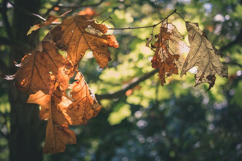 fall-17