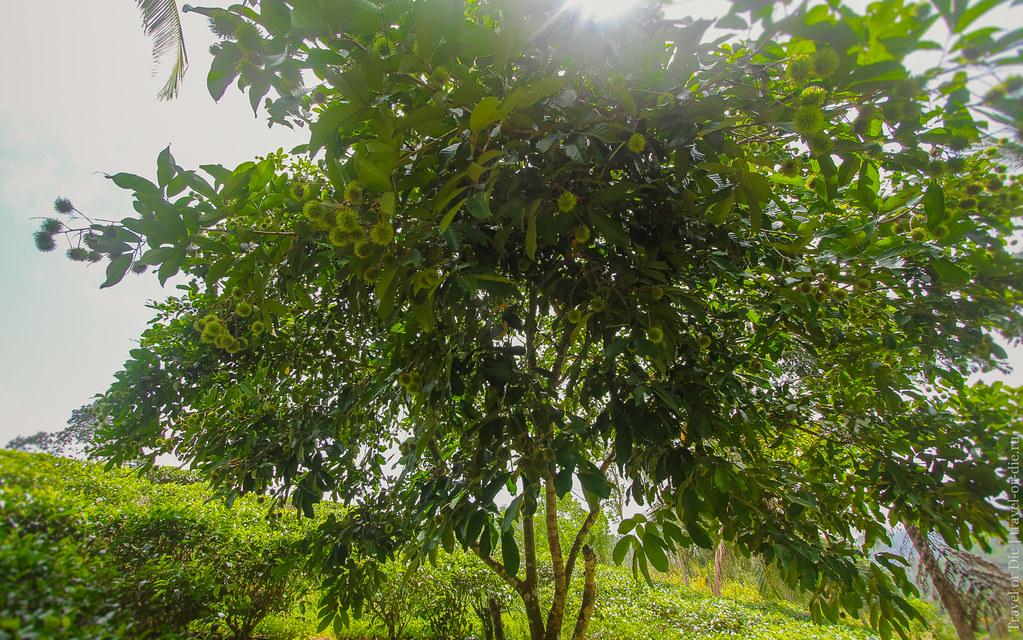23.06-Sinharaja-Sri-Lanka-canon-1500px-016