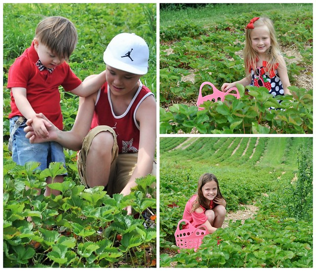 Strawberry Picking Family Tradition