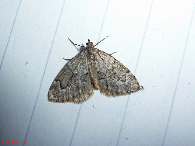 44 Juniper Carpet 181014