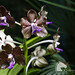 Orchid garden by Vicktrr