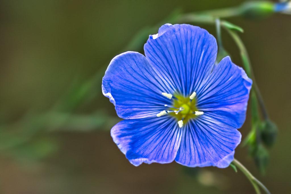 Wild-Flower-15-7D1-082117