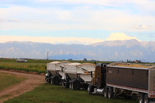 Trucks all lined up (with a gorgeous mountain backdrop to boot).