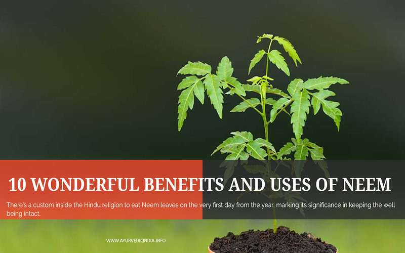 10 Benefit And Uses Of Neem Tree- Azadirachta Indica