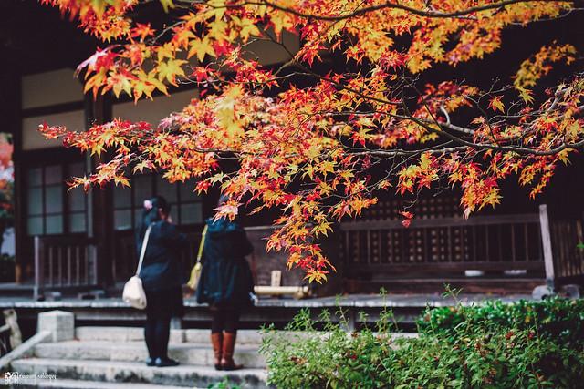 十年,京都四季 | 卷二 | 年月輪轉 | 26