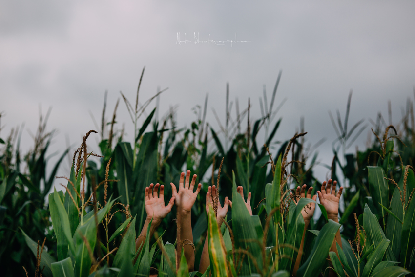 Los chicos del maíz para Litel Pipol... Semana 17 (Quinto Año)